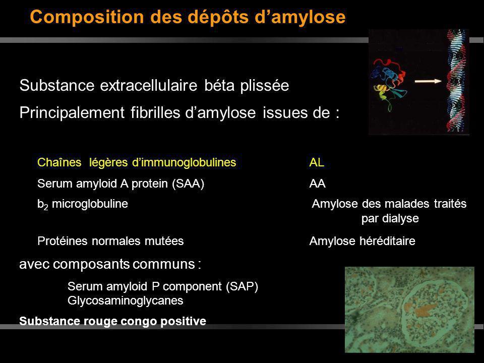 Composition des dépôts d'amylose