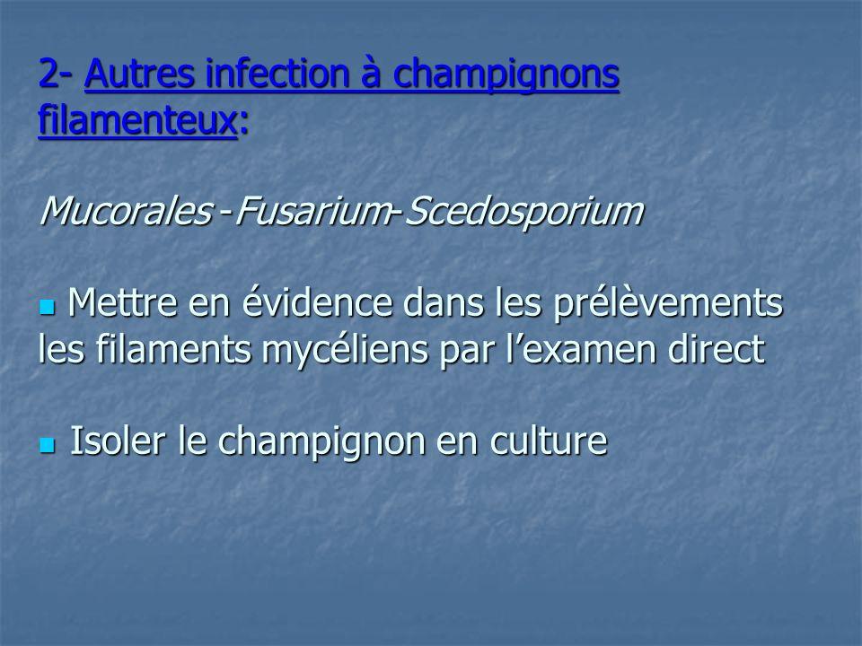 2- Autres infection à champignons filamenteux: Mucorales -Fusarium-Scedosporium  Mettre en évidence dans les prélèvements les filaments mycéliens par l'examen direct  Isoler le champignon en culture