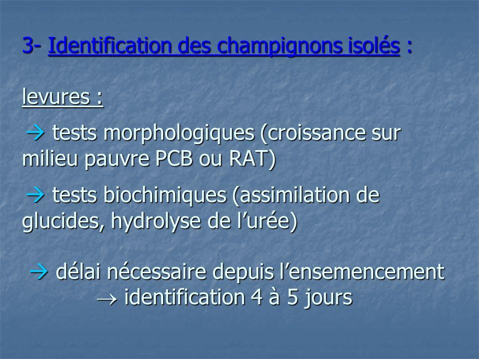 3- Identification des champignons isolés : levures :  tests morphologiques (croissance sur milieu pauvre PCB ou RAT)  tests biochimiques (assimilation de glucides, hydrolyse de l'urée)  délai nécessaire depuis l'ensemencement  identification 4 à 5 jours
