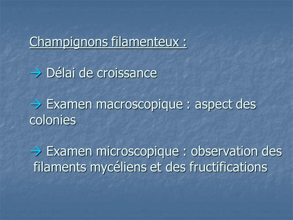 Champignons filamenteux :  Délai de croissance  Examen macroscopique : aspect des colonies  Examen microscopique : observation des filaments mycéliens et des fructifications