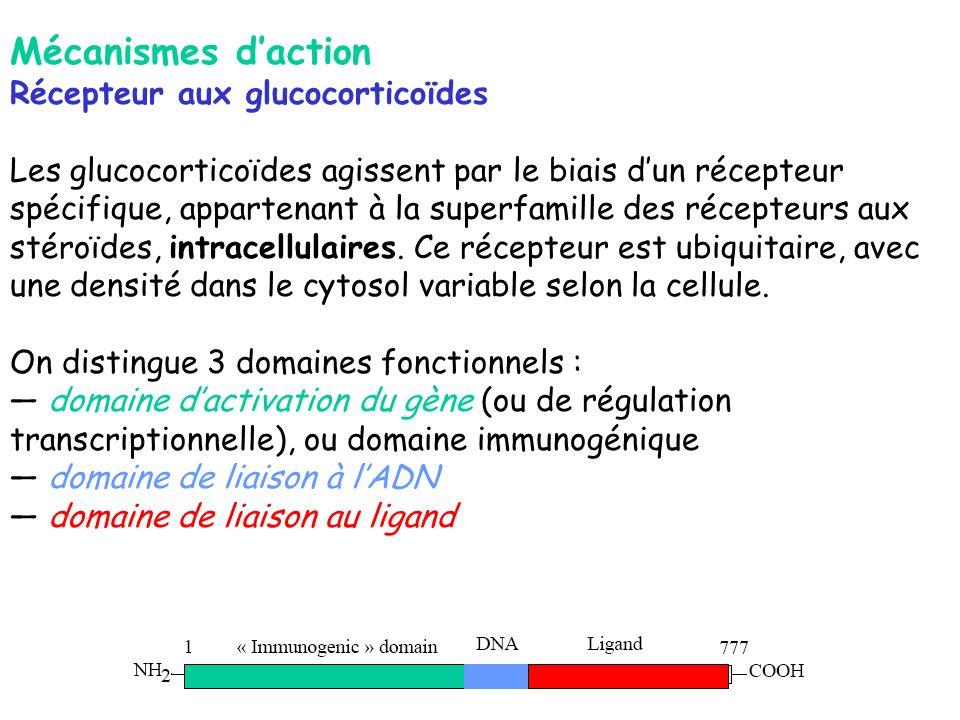Mécanismes d'action Récepteur aux glucocorticoïdes