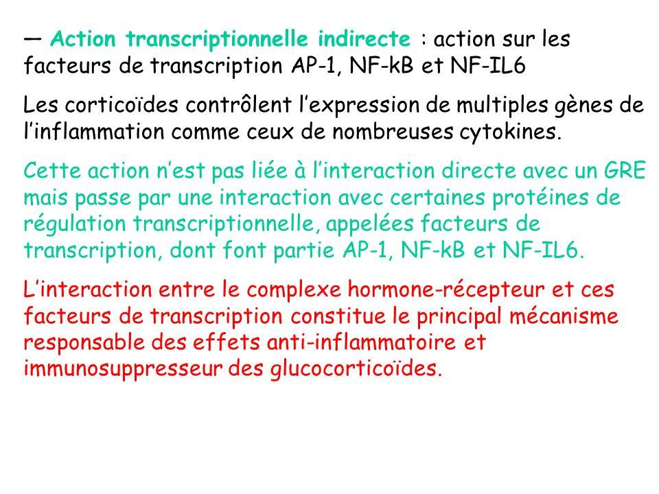 — Action transcriptionnelle indirecte : action sur les facteurs de transcription AP-1, NF-kB et NF-IL6