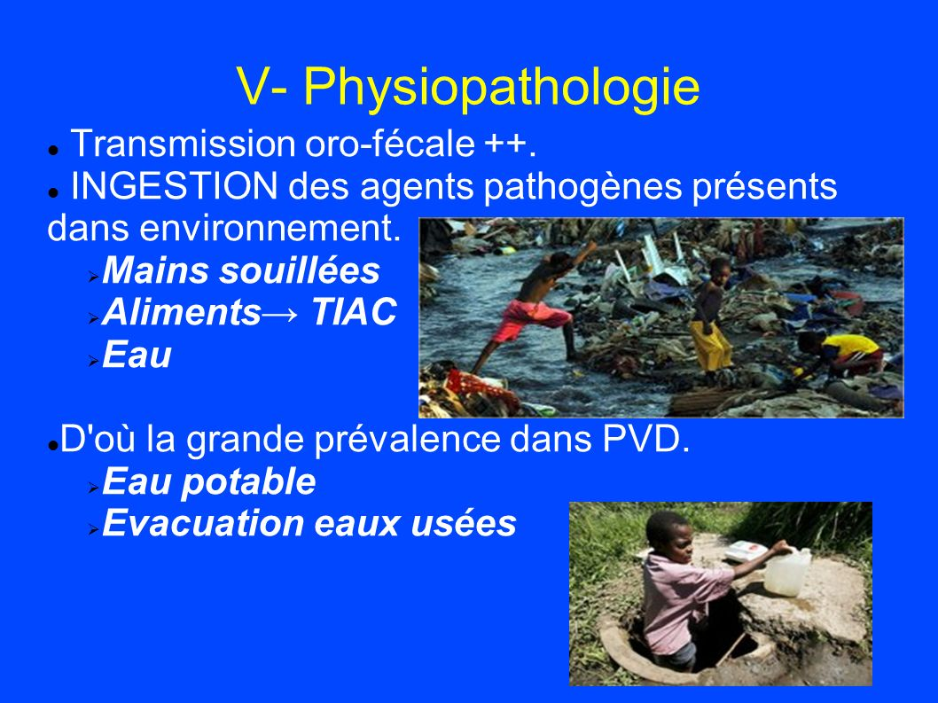 V- Physiopathologie Transmission oro-fécale ++.