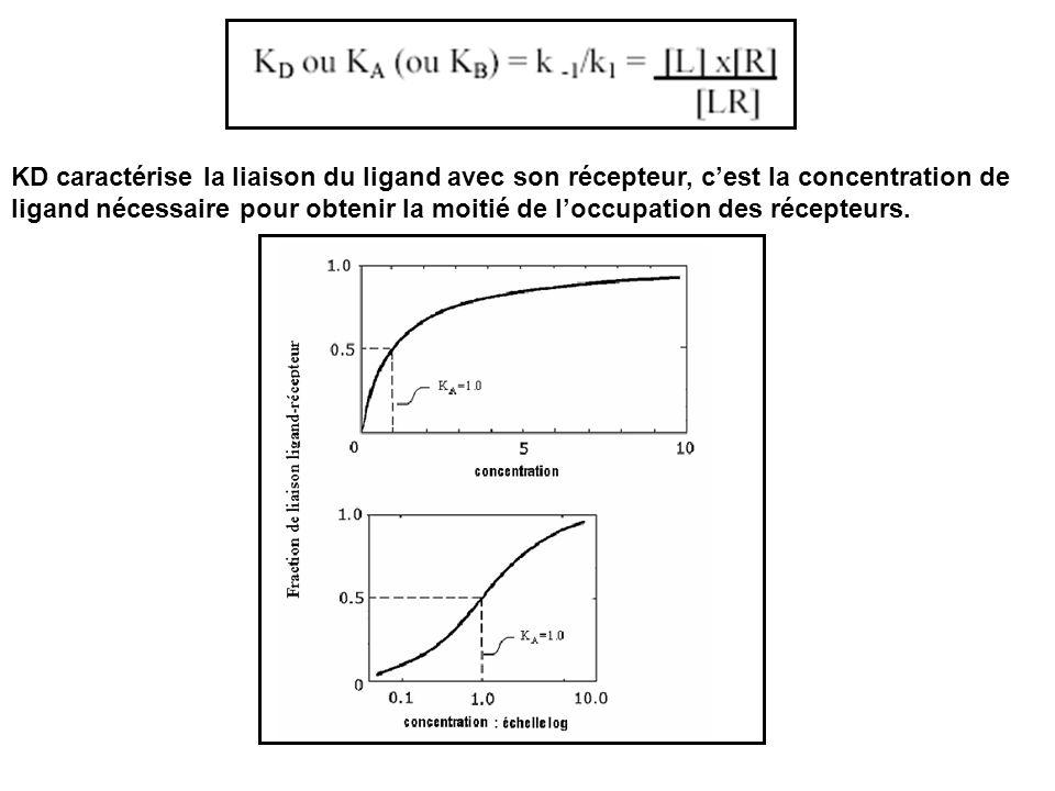 KD caractérise la liaison du ligand avec son récepteur, c'est la concentration de ligand nécessaire pour obtenir la moitié de l'occupation des récepteurs.