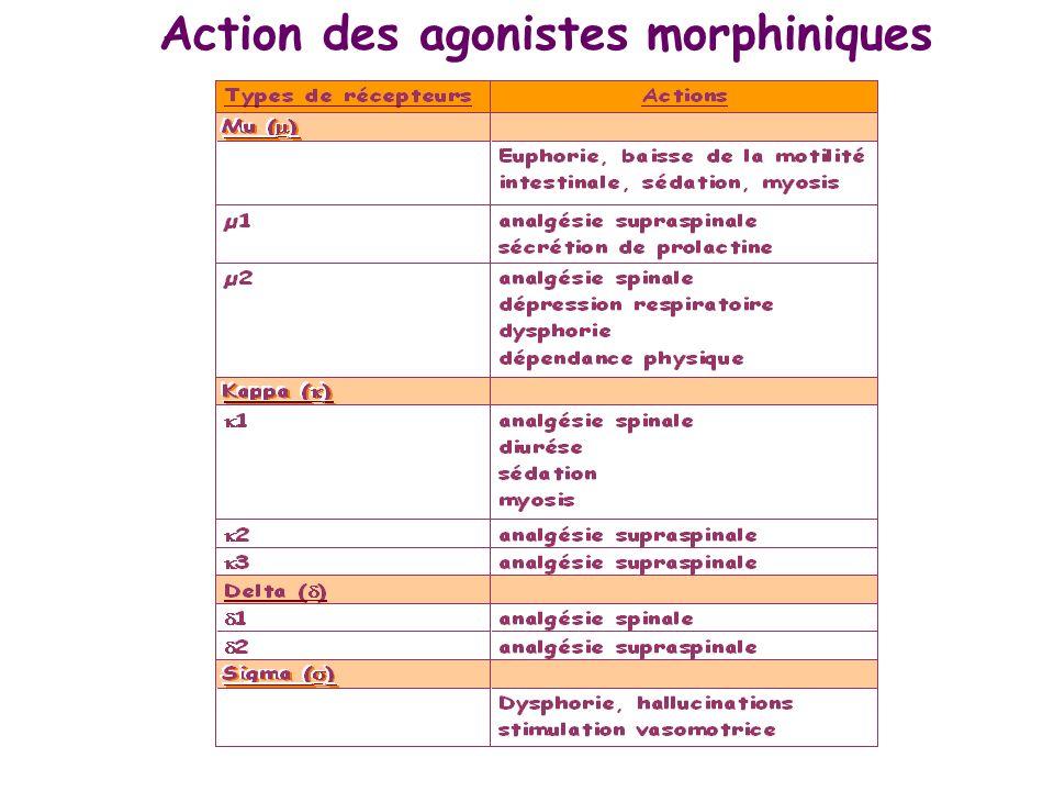 Action des agonistes morphiniques