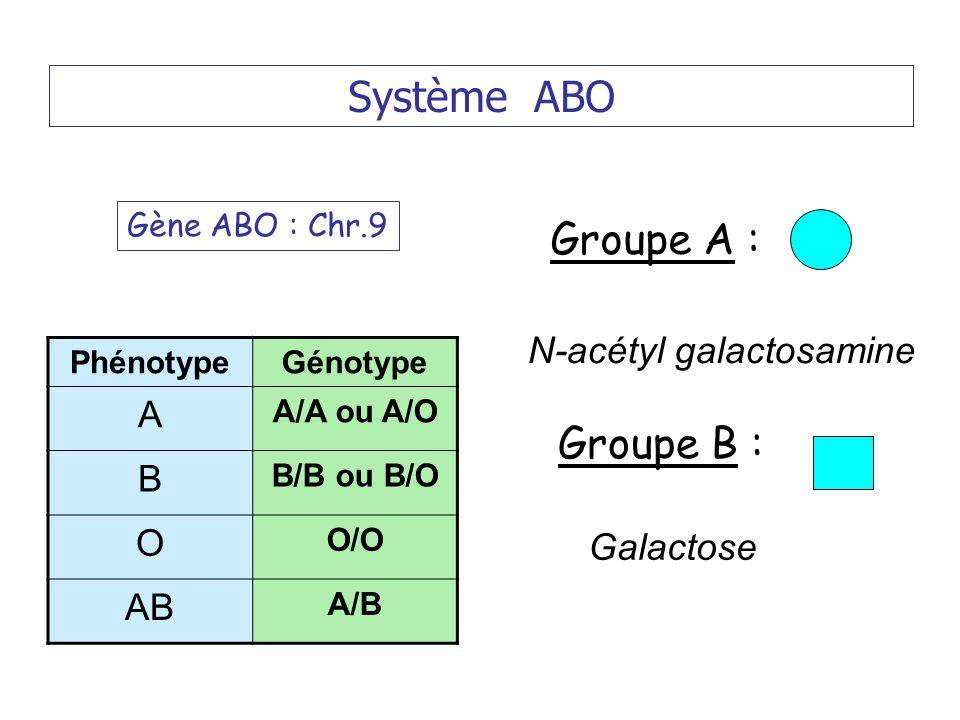 Système ABO Groupe A : Groupe B : A B O AB N-acétyl galactosamine
