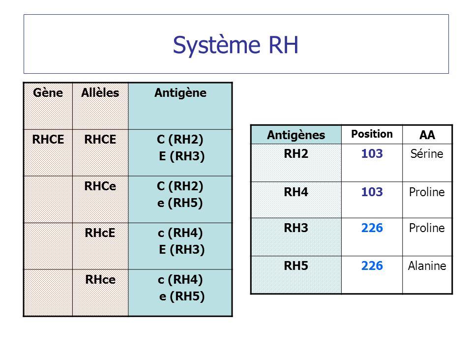Système RH Gène Allèles Antigène RHCE C (RH2) E (RH3) RHCe e (RH5)