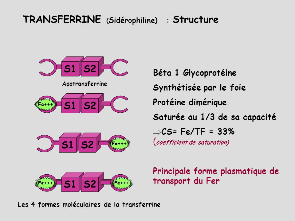 TRANSFERRINE (Sidérophiline) : Structure