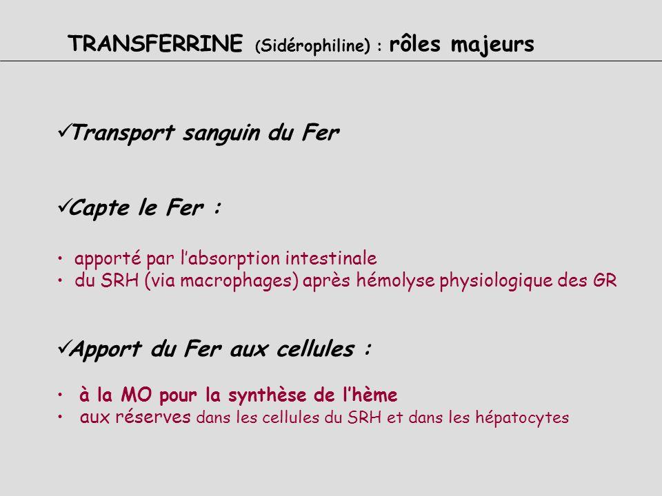 TRANSFERRINE (Sidérophiline) : rôles majeurs