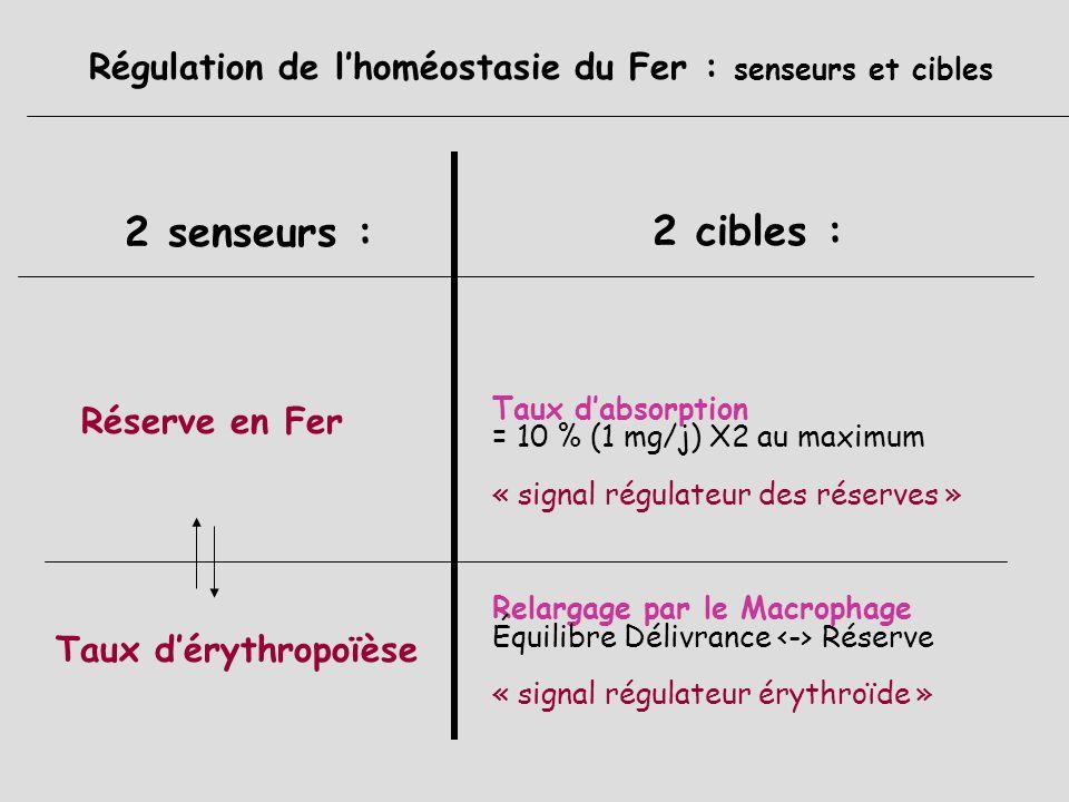Régulation de l'homéostasie du Fer : senseurs et cibles