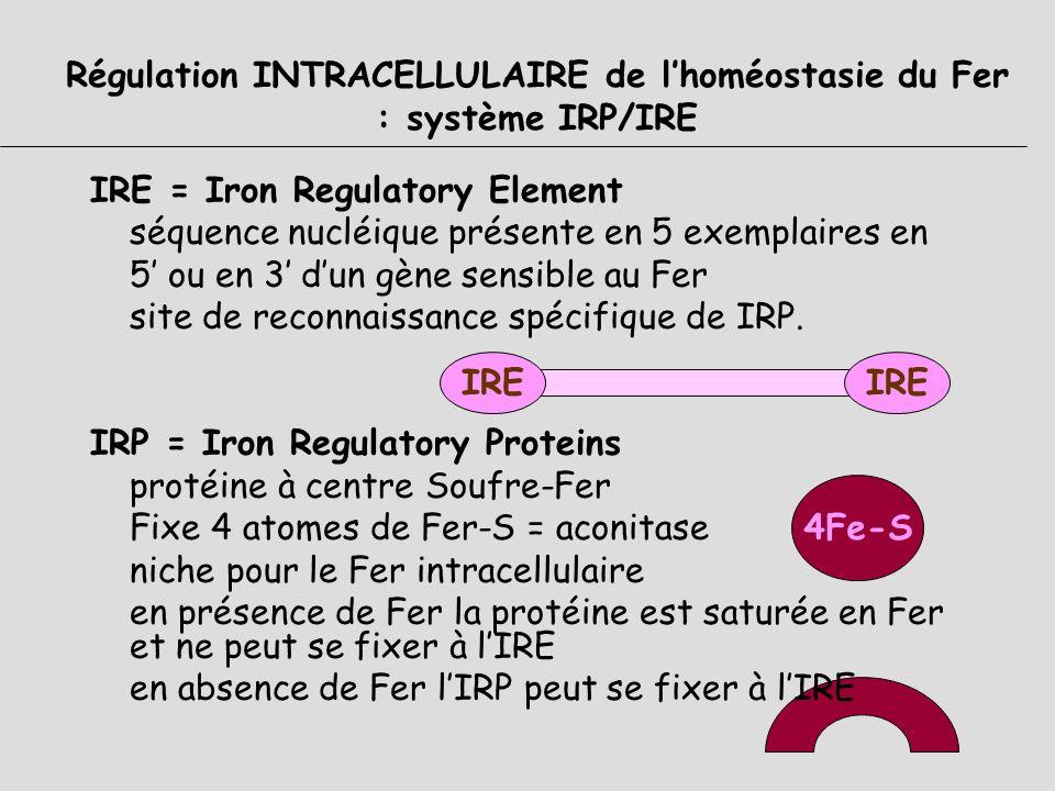 Régulation INTRACELLULAIRE de l'homéostasie du Fer : système IRP/IRE
