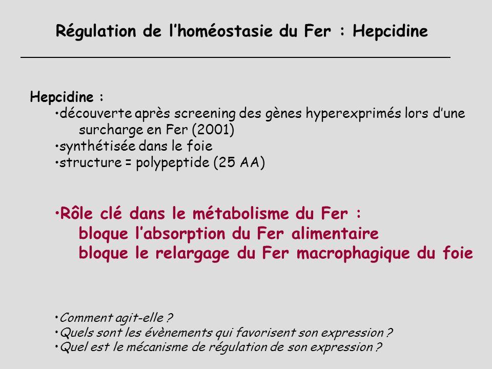 Régulation de l'homéostasie du Fer : Hepcidine