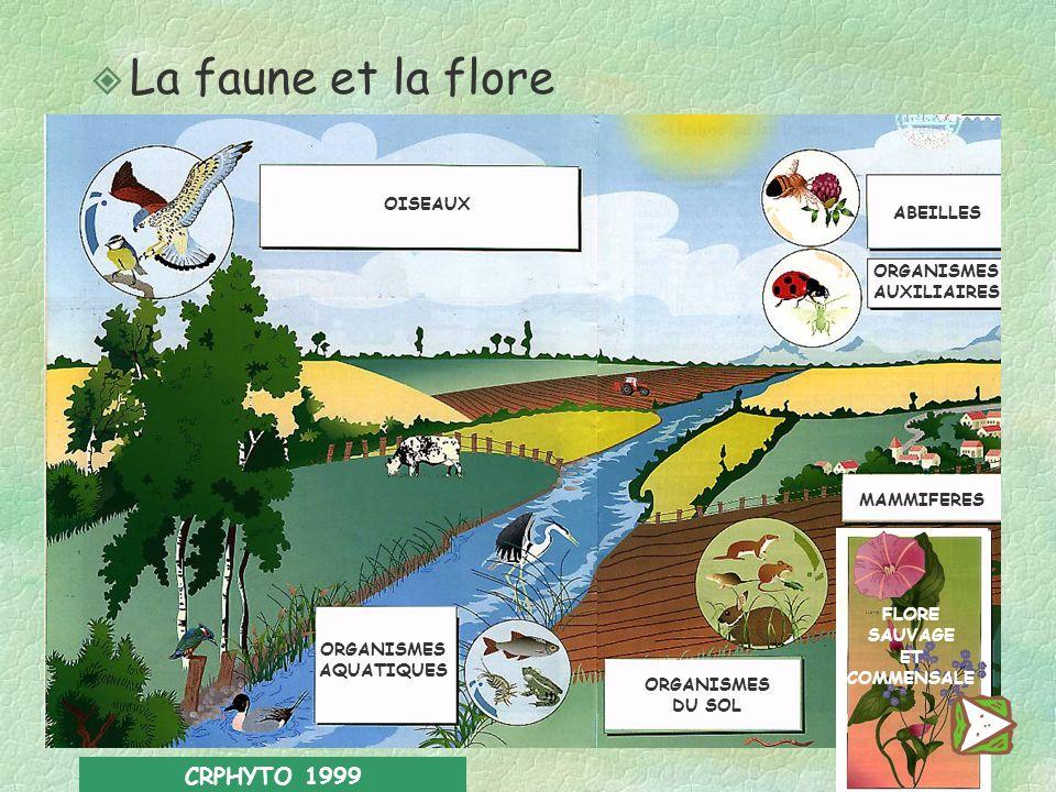 La faune et la flore CRPHYTO 1999 OISEAUX ABEILLES ORGANISMES