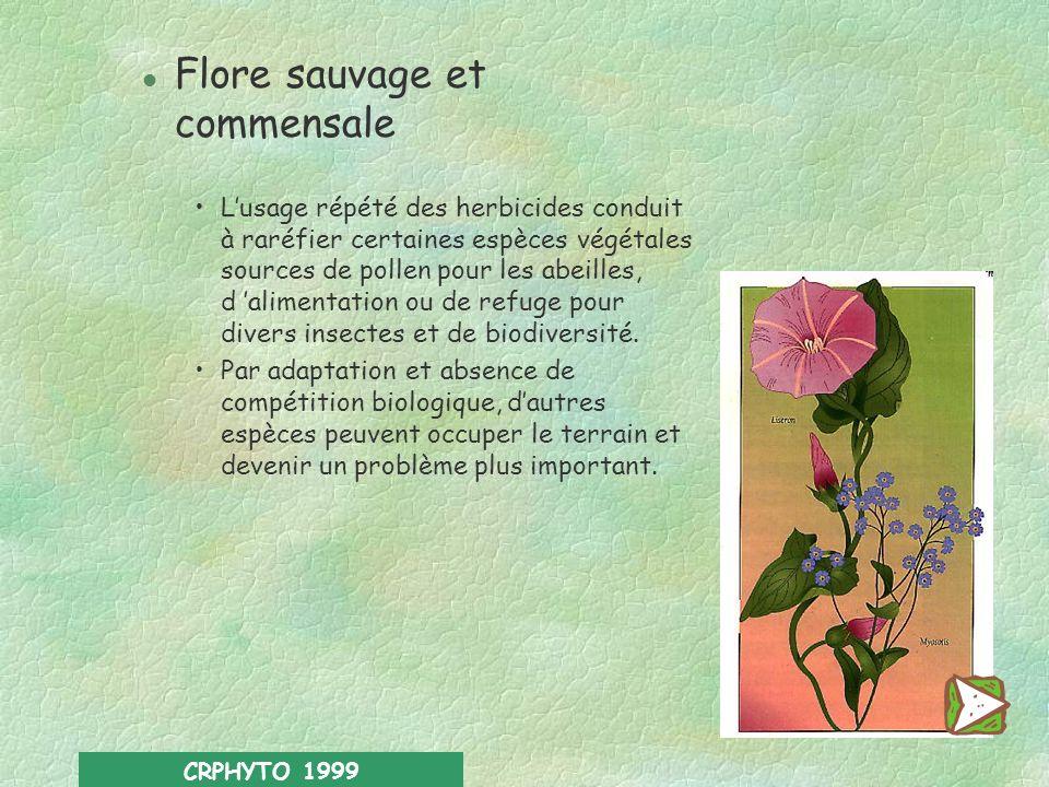 Flore sauvage et commensale