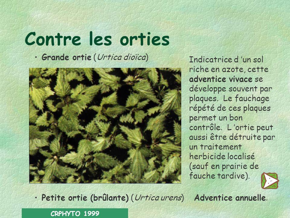 Contre les orties Grande ortie (Urtica dioïca)