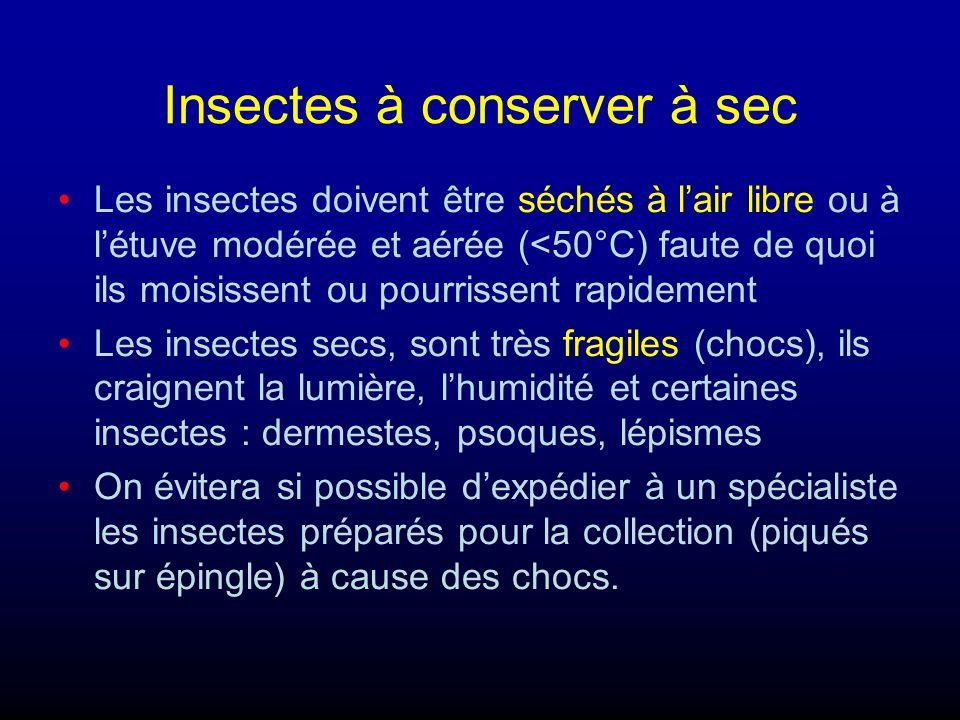 Insectes à conserver à sec