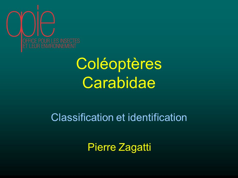 Classification et identification