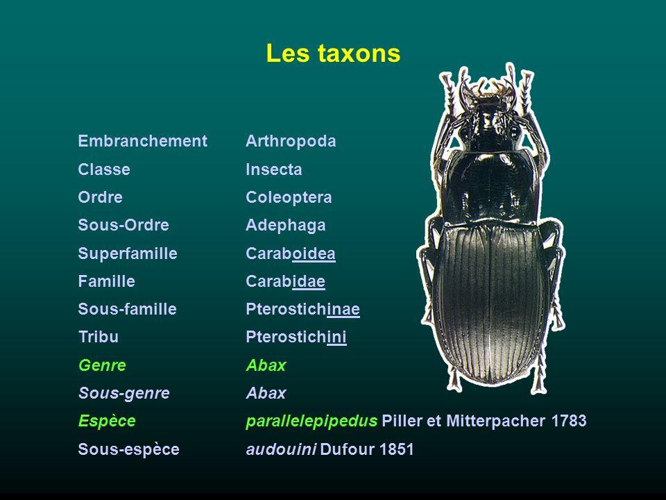 Les taxons Embranchement Classe Ordre Sous-Ordre Superfamille Famille