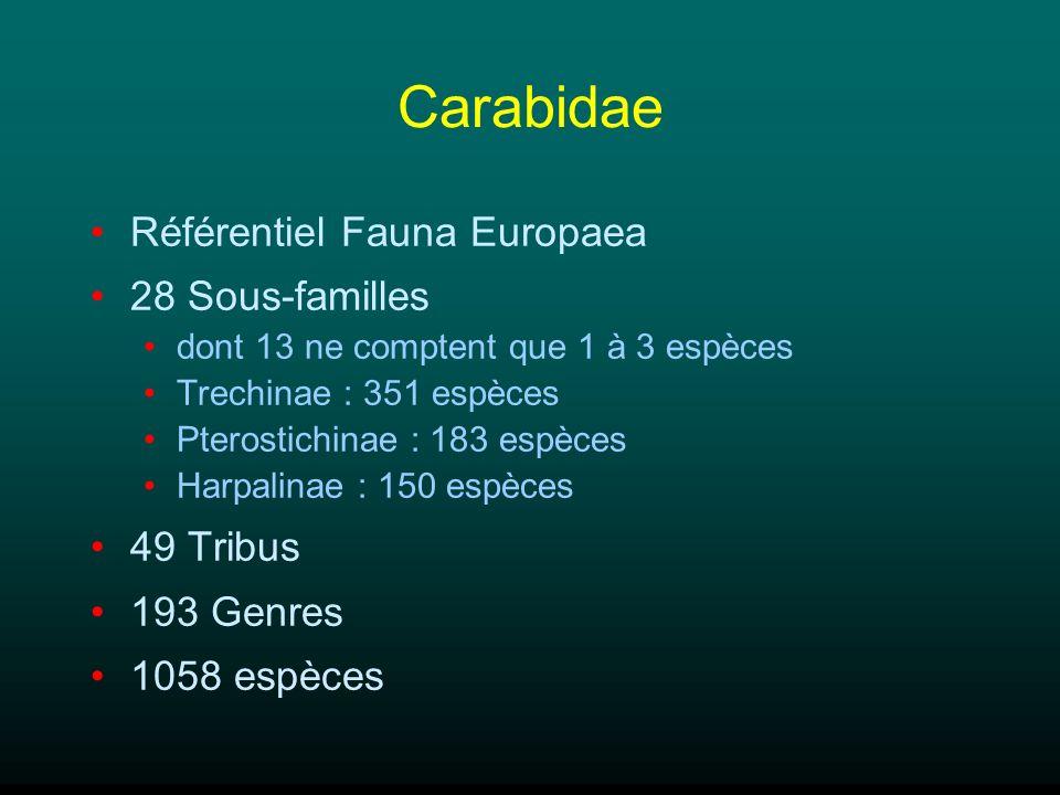 Carabidae Référentiel Fauna Europaea 28 Sous-familles 49 Tribus