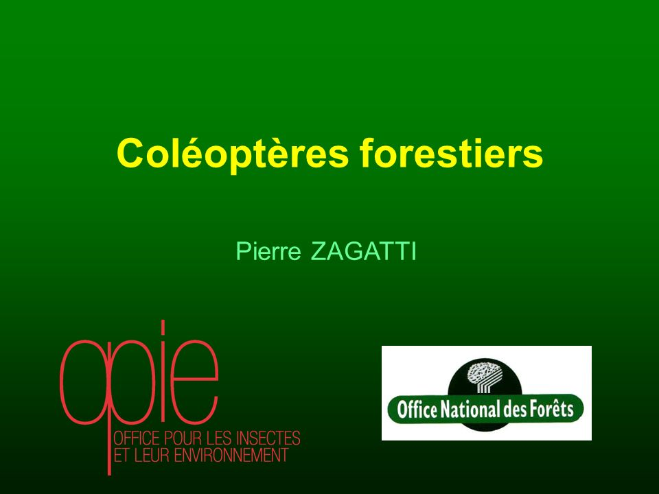 Coléoptères forestiers
