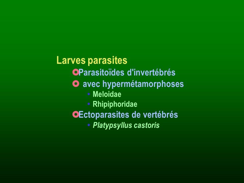 Larves parasites Parasitoïdes d invertébrés avec hypermétamorphoses