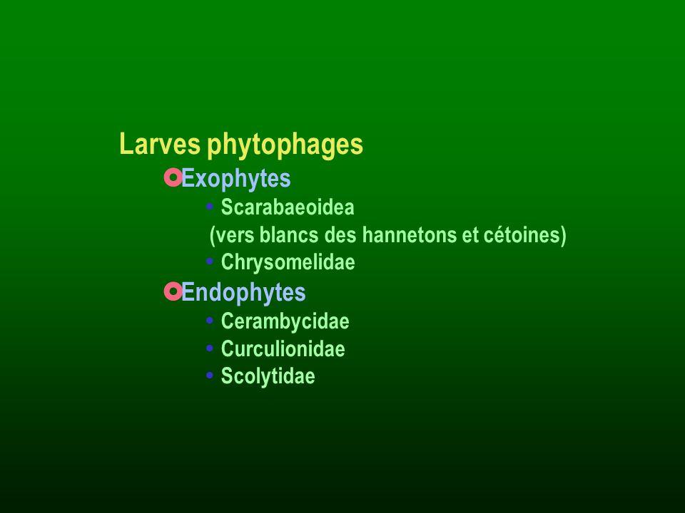 Larves phytophages Exophytes Endophytes Scarabaeoidea