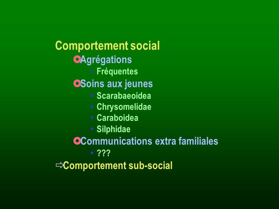Comportement social Agrégations Soins aux jeunes