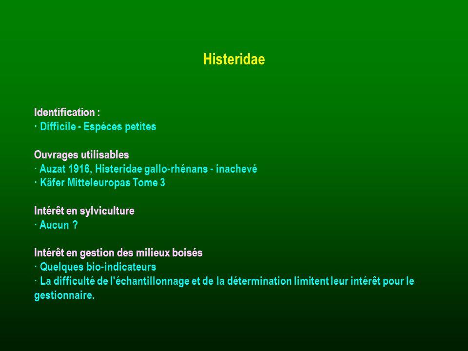 Histeridae Identification : · Difficile - Espèces petites