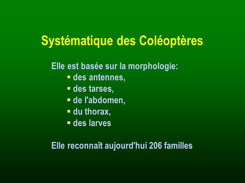 Systématique des Coléoptères