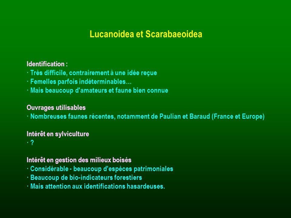 Lucanoidea et Scarabaeoidea