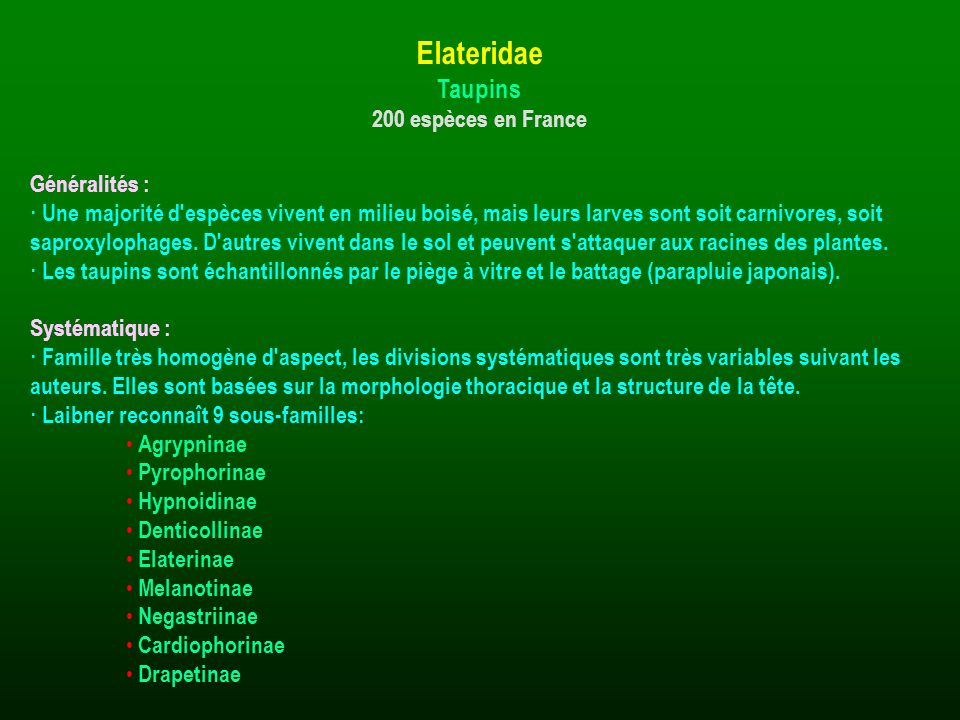 Elateridae Taupins 200 espèces en France Généralités :