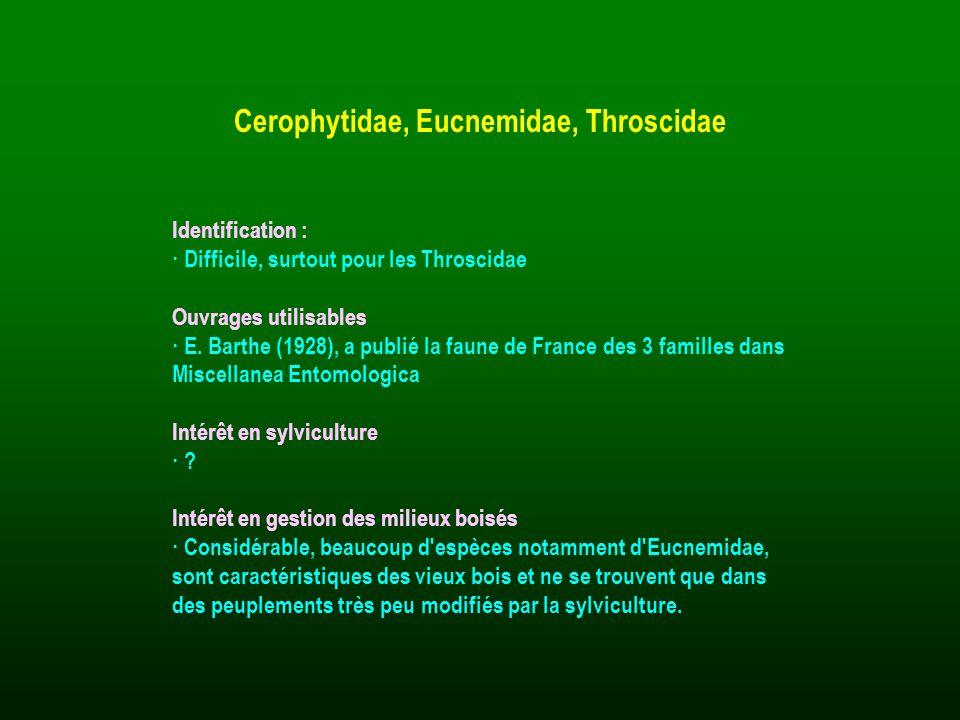 Cerophytidae, Eucnemidae, Throscidae