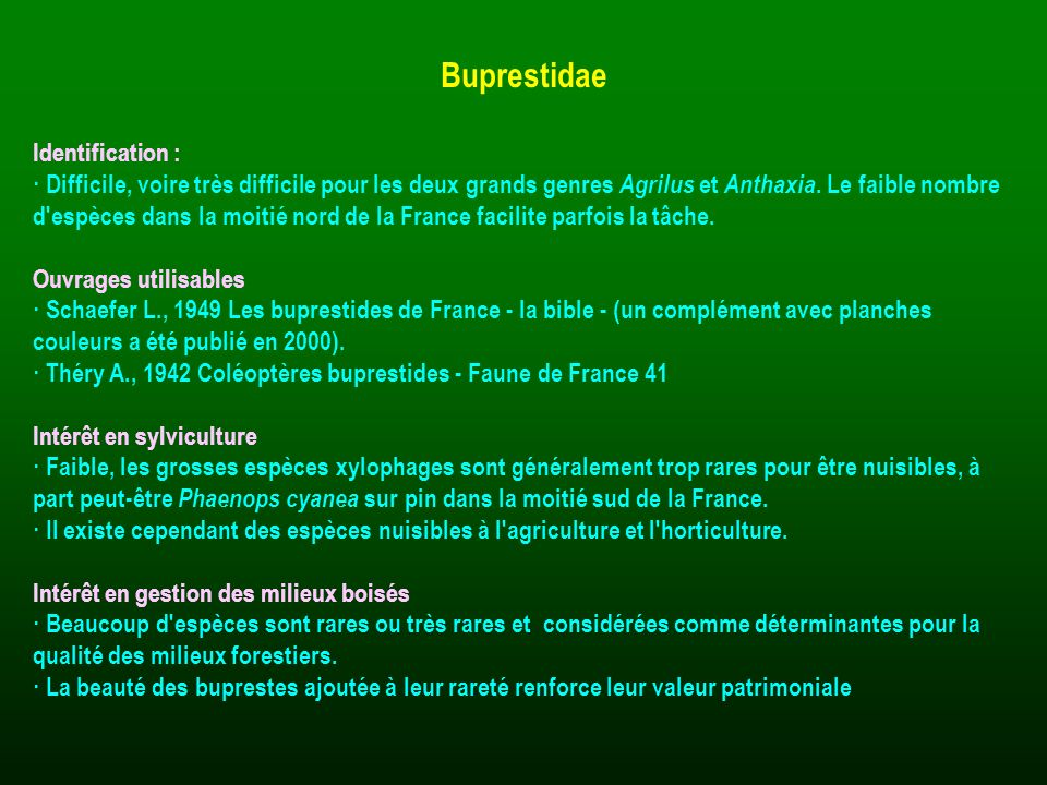 Buprestidae Identification :