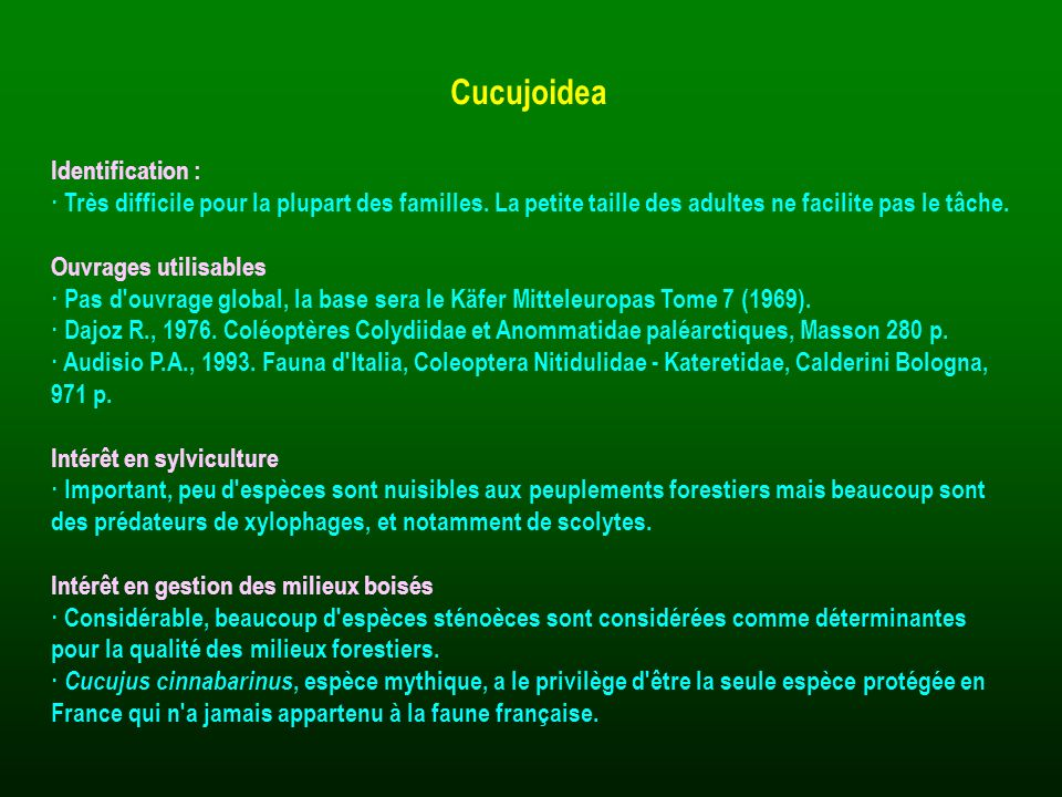 Cucujoidea Identification :