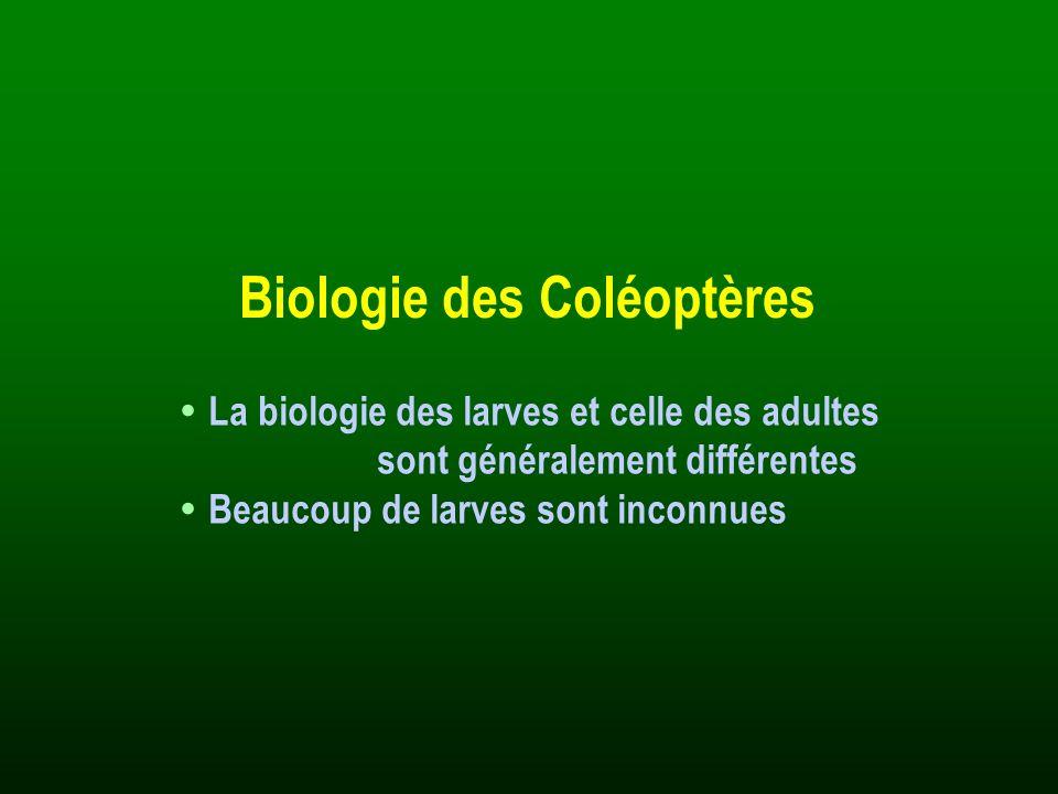 Biologie des Coléoptères