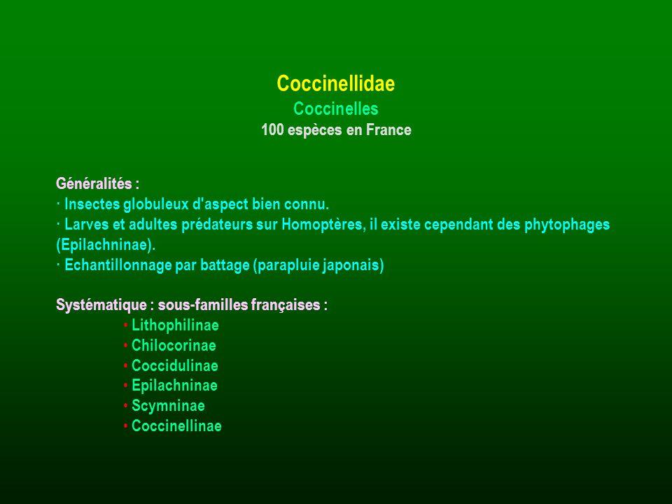 Coccinellidae Coccinelles 100 espèces en France Généralités :