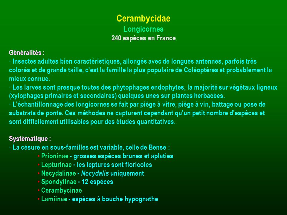Cerambycidae Longicornes 240 espèces en France Généralités :