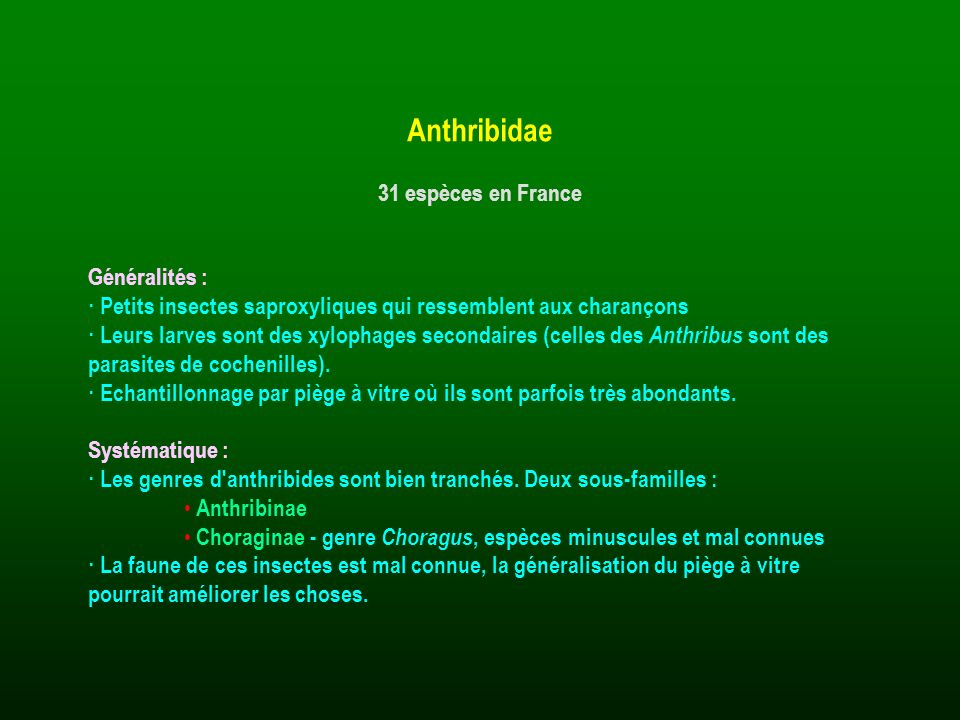 Anthribidae 31 espèces en France Généralités :
