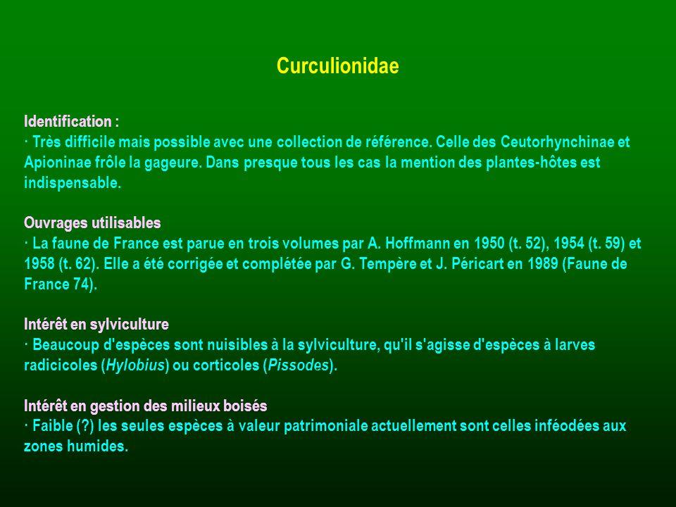 Curculionidae Identification :