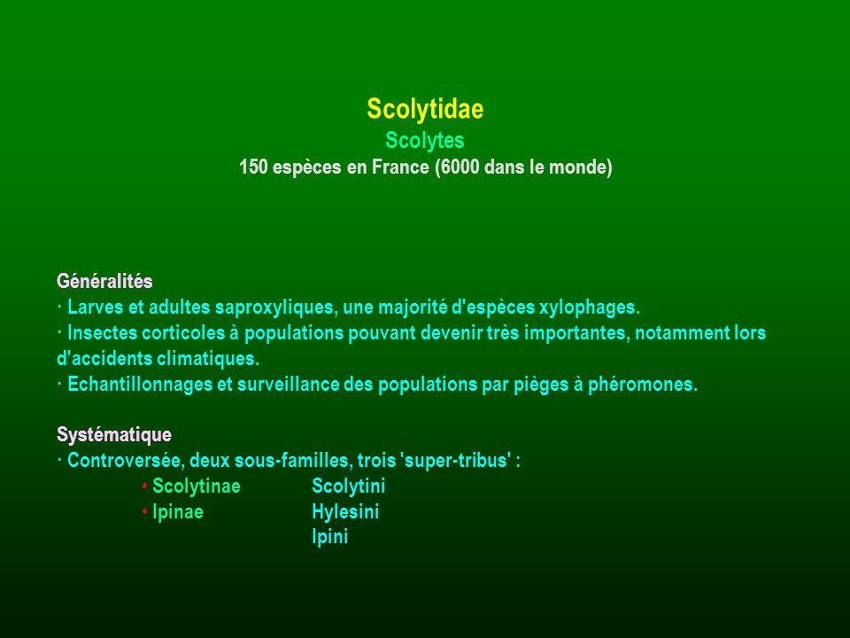 150 espèces en France (6000 dans le monde)