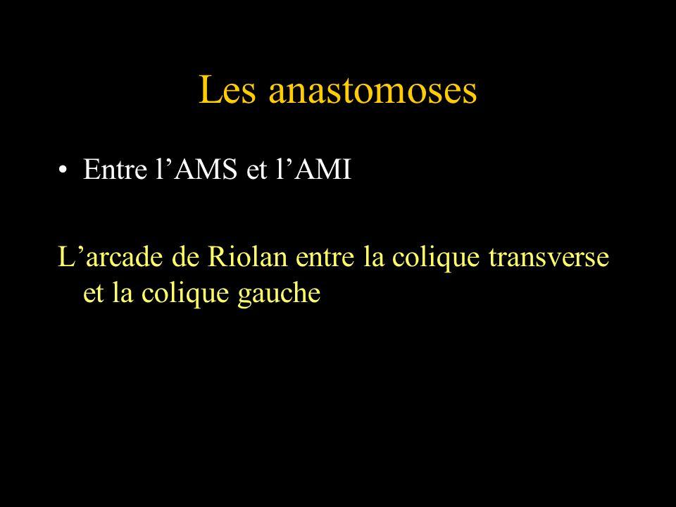 Les anastomoses Entre l'AMS et l'AMI