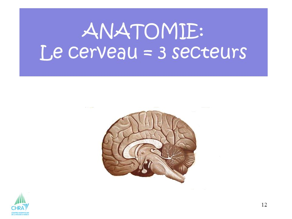 ANATOMIE: Le cerveau = 3 secteurs