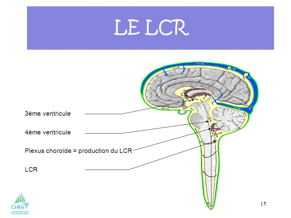 LE LCR 3ème ventricule 4ème ventricule