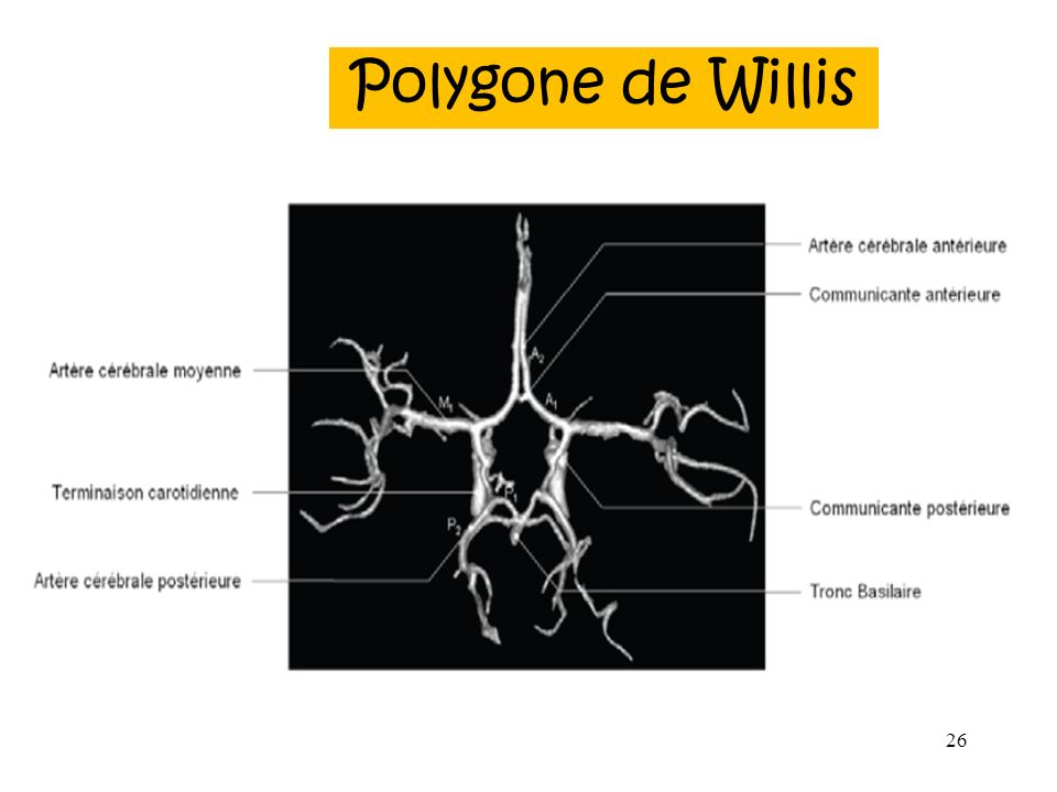 Polygone de Willis