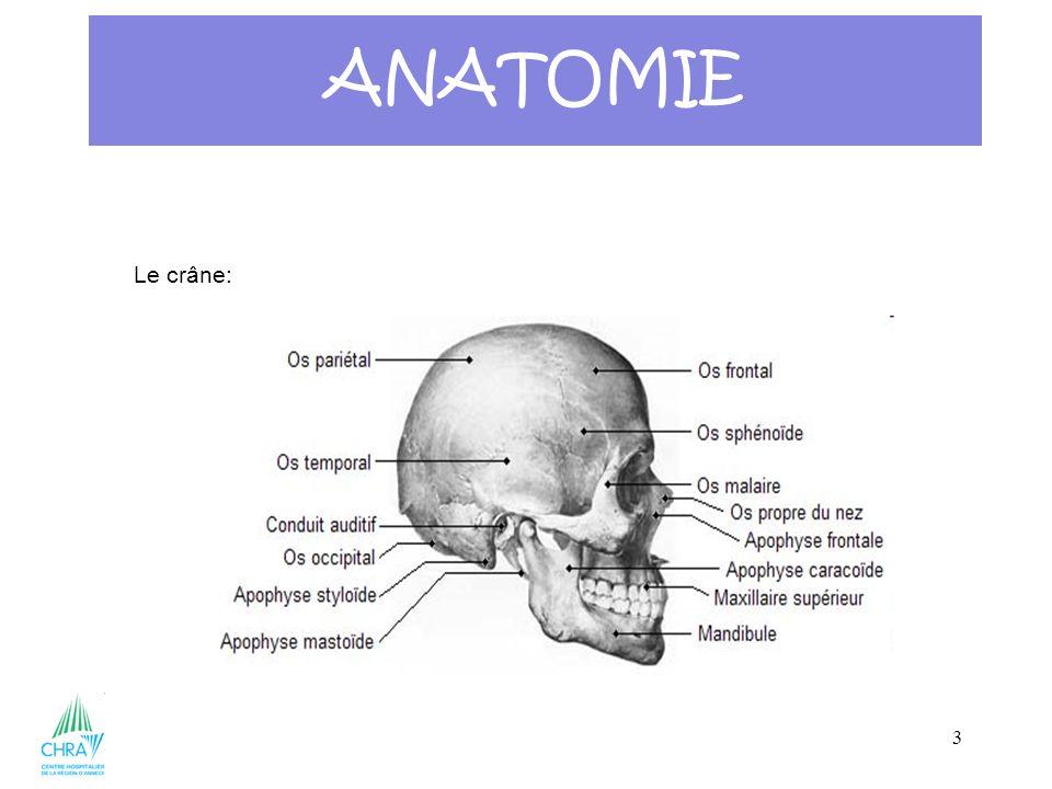 ANATOMIE Le crâne: