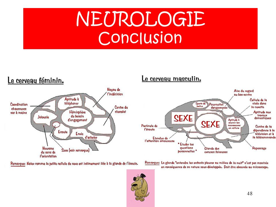 NEUROLOGIE Conclusion NEUROLOGIE ANATOMIE