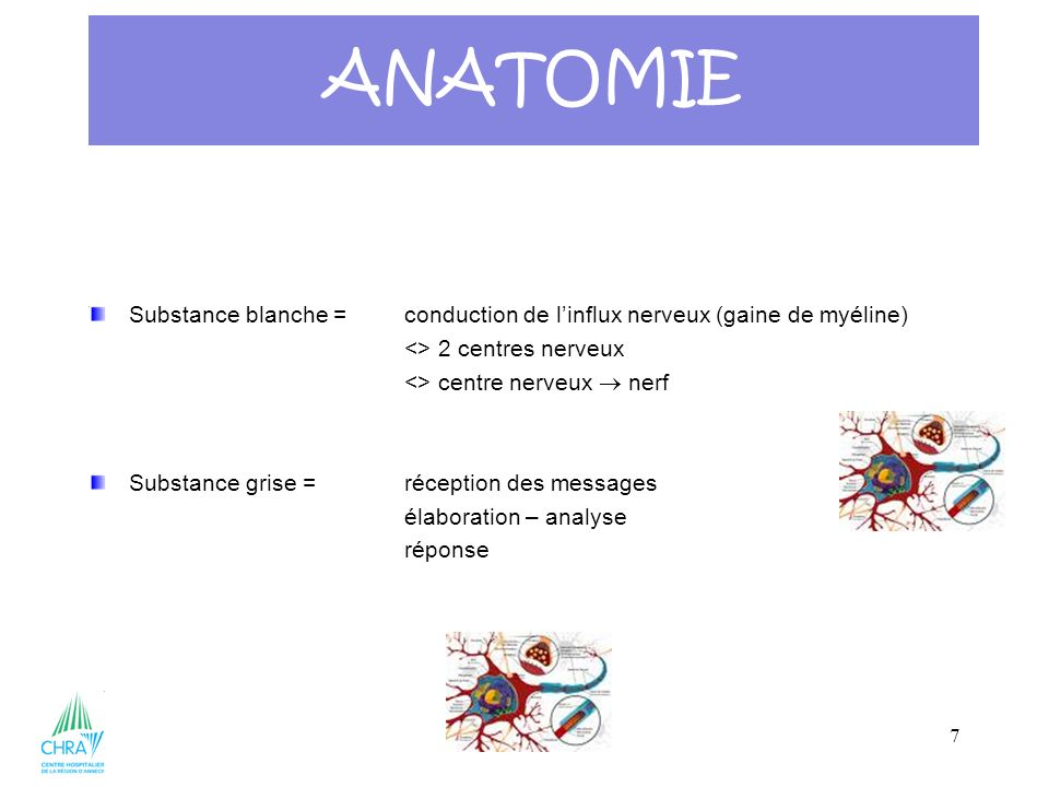 ANATOMIE Substance blanche = conduction de l'influx nerveux (gaine de myéline) <> 2 centres nerveux.