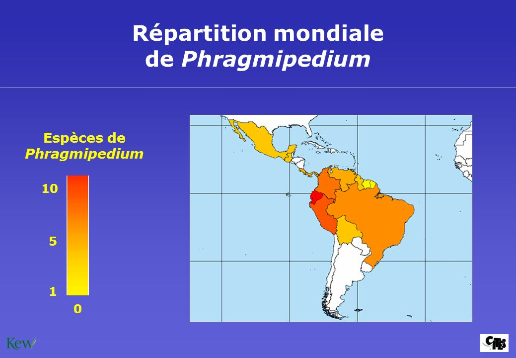 Répartition mondiale de Phragmipedium