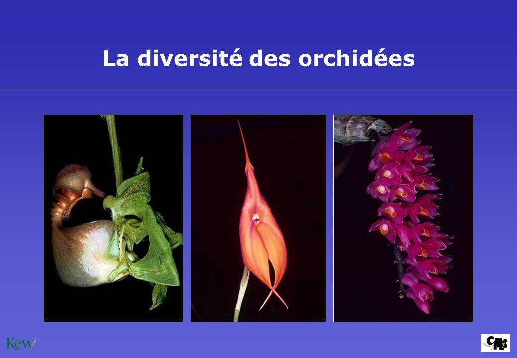 La diversité des orchidées