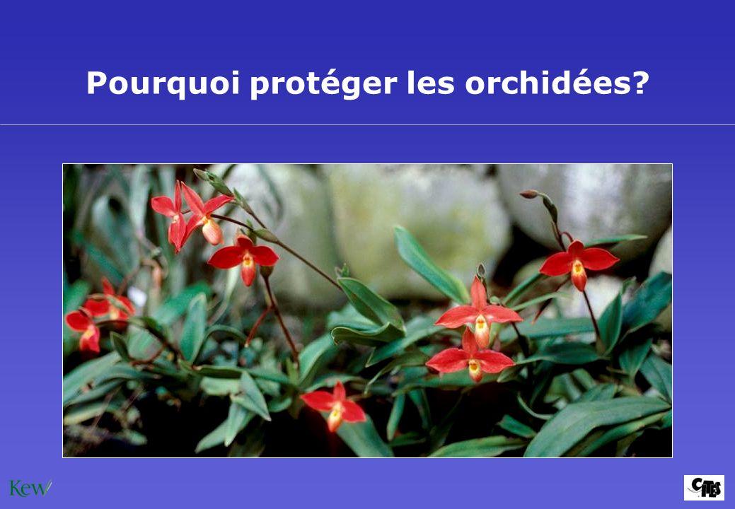 Pourquoi protéger les orchidées